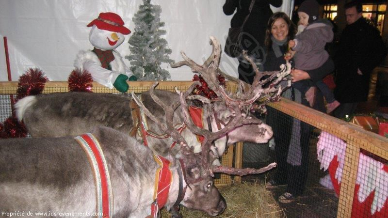 IDS ANIMATIONS - SAINT-OUEN-EN-BRIE - Arbre de Noël
